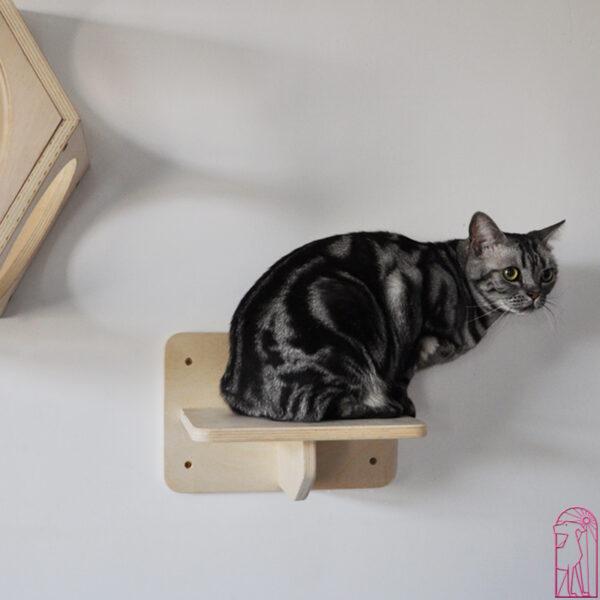 Cat Climbing Step